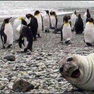 Sealbomb