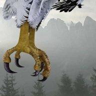 Dee Why Eagle